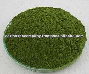 Moringa powder for ayurvedic medicine
