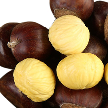 Eating chinese chestnuts
