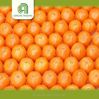 Brand new fresh fruits - mandarin orange from pakistan with low price