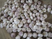 2012 Shandong White Garlic Price