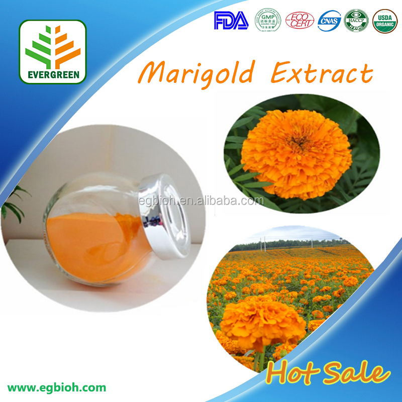 Marigold Root Extract/Marigold Plant Extract/Marigold Seeds