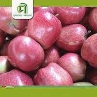 china fresh red delicious apples red chief apples with low price