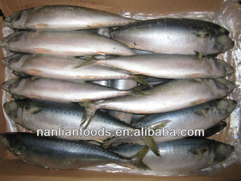 frozen fish (frozen mackerel)