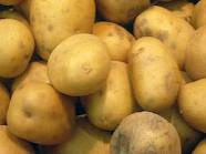 FRESH NEW CROP Potato