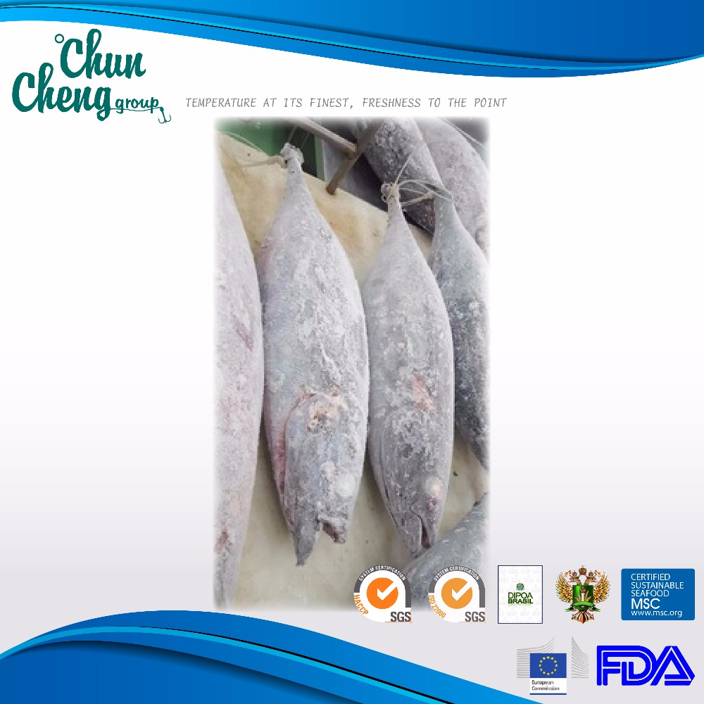 AL001 Frozen Albacore Whole Round canned tuna fish yellowfin tuna skipjack tuna