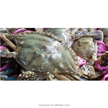 Hot sale whole round live blue crab in China