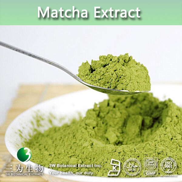 Matcha Green Tea Powder Benefits,Matcha Powder,Green Tea Extract 6%~70% EGCG