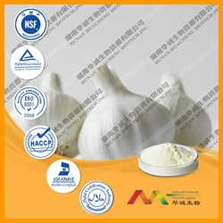 NSF-cGMP maunfacture and 100% natural powder extract garlic wholesales