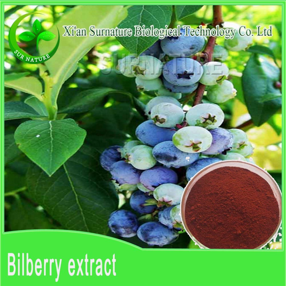 fresh Bilberry extract powder from Chineses supplier