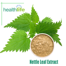 Hot Selling Natural Nettle Leaf Extract Powder With Good Price