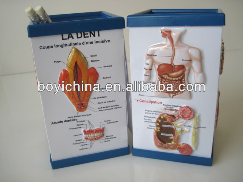 PVC pen holder with 3d medical chart for Pharmaceutical company