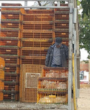 Farmer widely used live chicken cage to transport high quality