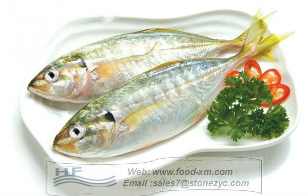 sea frozen horse mackerel trachurus japonicus whole round