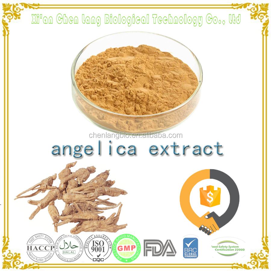 Competitive Price Angelica Sinensis Angelica Root Extract 10:1