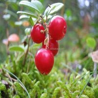 Natural Herbal Bilberry Extract