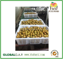 100% sweet,juicy,health longan thai fruit fresh