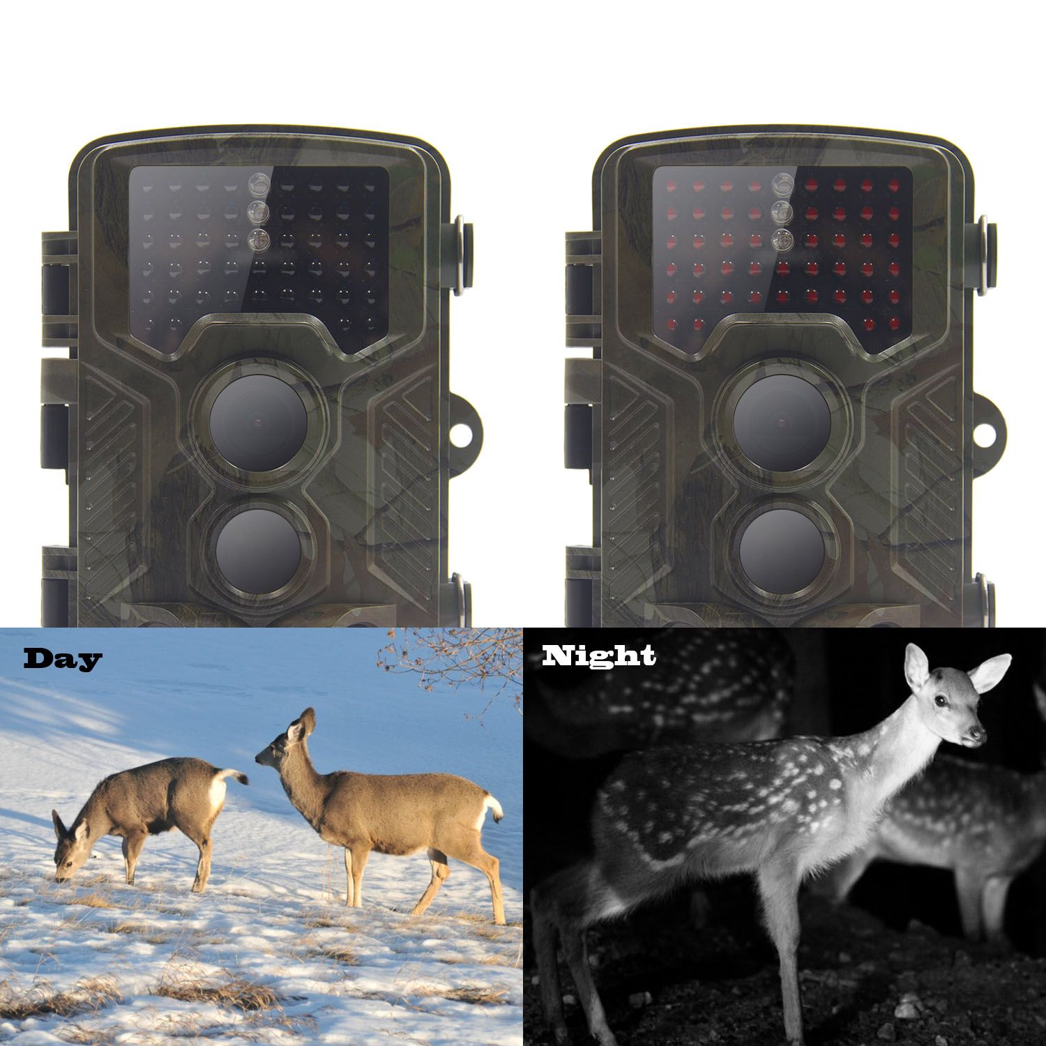 Photo Trap Trail Camera1.jpg