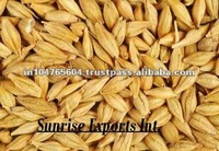 Barley For Cattle Feed