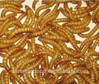 China Eco-friendly Microwave Dried Mealworms for birds snakes lizards pet food wholesale