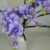 Cheap items to sell orchid artificial flower fabric flower decoration home
