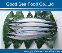 Seafood of Frozen pacific Saury whole round