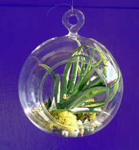 MH-12598 clear hanging glass bauble terrarium decorative glass orbs