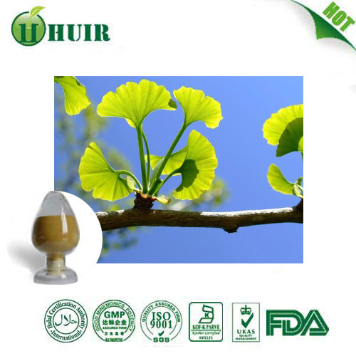 factory supply high quality Ginkgo Biloba Extract 24%/6% Ginkgo Biloba P.E.