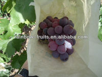 Chinese red globe grape