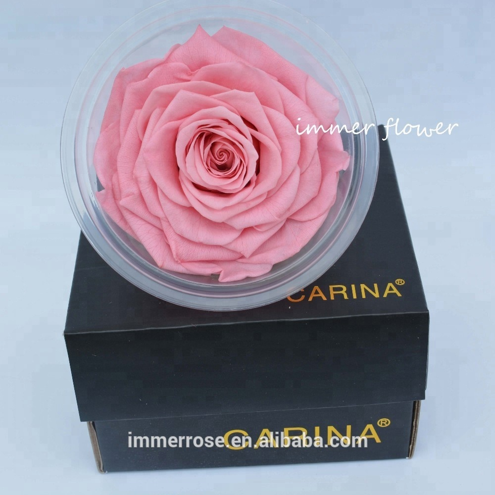 Wholesale preserved flowers - Online Buy Best preserved flowers from ...