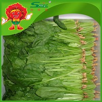 Good spherical spinach with lowest price