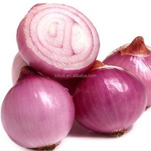 5-8cm fresh shallot/onion