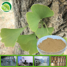 High quality extract of ginkgo biloba leaf