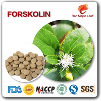 GMP certified OEM Slimming Product Weight Loss Forskolin Pills