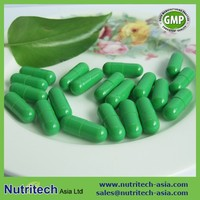 GMP Certificated contract manufacturer Green Tea hard Capsules oem in bulk