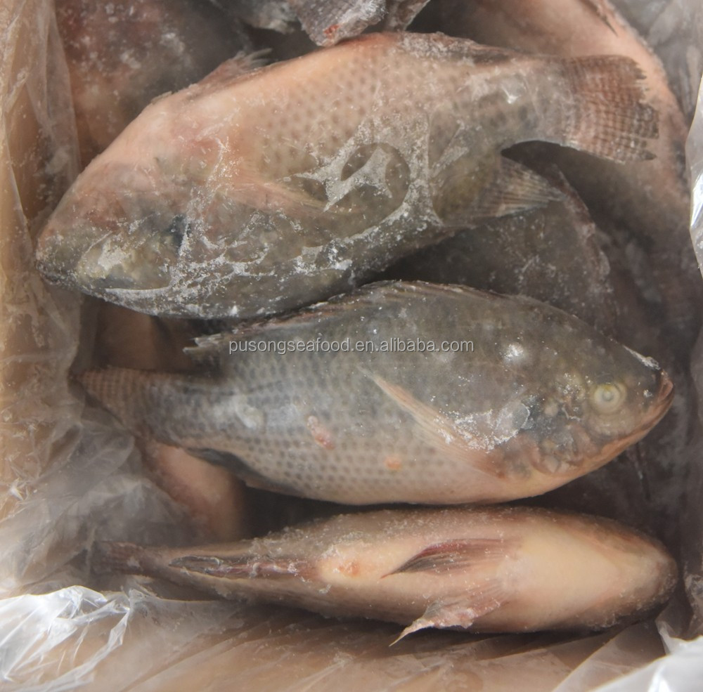 All size Frozen Tilapia fish for Indonesia Market