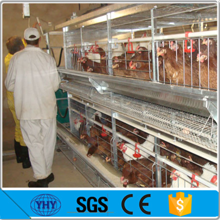 automatic ventilation system chicken farm hot sale a type layer poultry battery