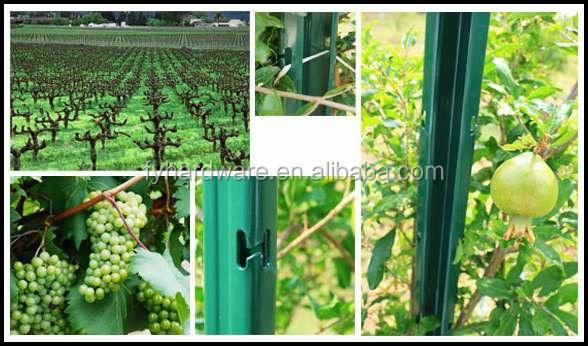 galvanized steel vineyard trellis post to support grape in Chinese hardware factory