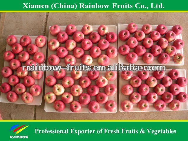 Fresh Shanxi Fuji Apple