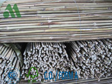 bamboo sticks for nursery/bamboo for plantation garden/bamboo canes for agriculture