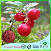 Best Price Gold Factory Provide Oxycoccos Extract/Cranberry Extract