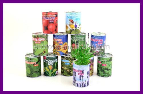 Magic Beans In Can With Words Plant