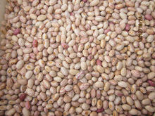 2013 new crop light speckled kidney beans Round shape Huanan type(655)