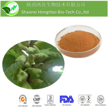 Herb Medicine Chinese Gall Extract Monohydrate Gallic Acid 99% With Free Sample