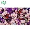/product-detail/chinese-fresh-nature-garlic-on-sale-62047975717.html