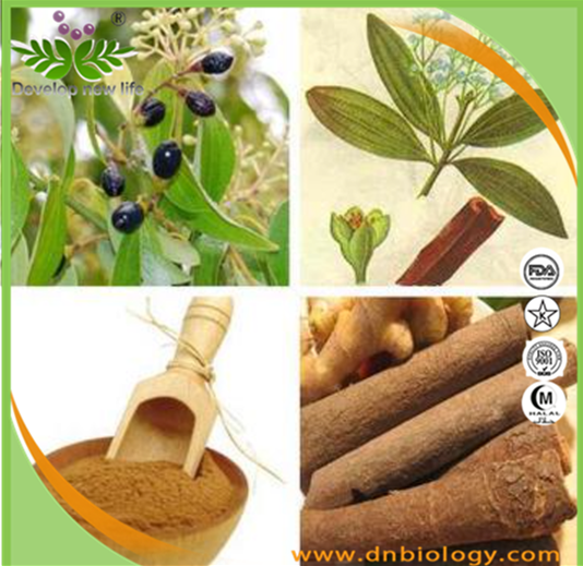 supply100% natural ceylon cinnamon bark extract/ceylon cinnamon powder