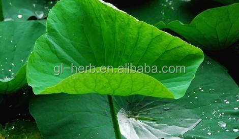High quality Lotus Leaf P.E.10:1 Folium Nelumbinis
