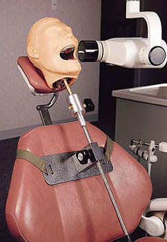 X- Ray Dental Manikin