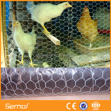 China Anping Factory GI Chicken Wire Mesh(Factory;ISO Certificated)