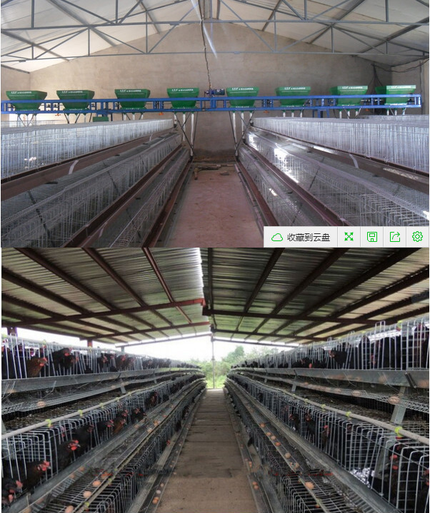 High quality Q235 steel metal wire material chicken cages/uganda poultry farm automatic chicken layer cage