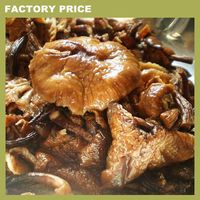 market prices for Armillaria mellea mushroom